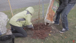Vanier Plants Trees on Campus to Improve Sustainability