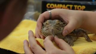 Animal Health Technology – Reptile Workshop